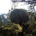 Turmartiger Hochpunkt des Koppachstein-Westgipfels, der nur mittels gesicherter Kletterei (IV?) ersteiglich wäre