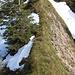 ...um den Tiefschnee unterhalb zu umgehen. Gleich turne ich über diese schmale Gratschneide, ...