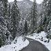 der restliche Abstieg auf einem Waldweg bis Tschierv