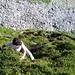 [U sglider] beim Alpenrosen-Klettern bei den Wasserfällen