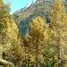 Herbstfarben vor dem Bietschhorn