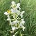 ... und herrliche Orchidee zum Abschluss