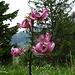 ... und fantastische Blumenpracht ...