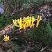 stets aufs Neue faszinierende Pilze (hier im Wald des Surgrabe')