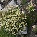 auf beinahe 3000 Metern derart schöne Blumenteppiche ...