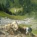 Steiler Anstieg in rutschigem Gelände