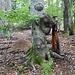 Leckstein (rechts vom Baum) und Ameisenhaufen.