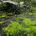 Hübsches Biotop im weglosen Gelände