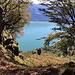 Lago Maggiore dalla Corona dei Pinci