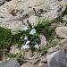 Hübsche Bergblümchen