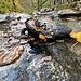 Salamandra incontrata sul sentiero all'inizio dell'escursione. (foto Fabio)