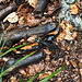 """Unterwegs am Mali Golak - """"Salamanderwetter"""". Während wir wenig begeistert durch den Regen stapfen, treffen wir nun immer wieder auf Alpensalamander."""