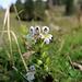 Augentrost gab es noch einigen, ansonsten sind die meisten Blumen ein Opfer des Wintereinbruchs geworden
