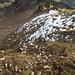 Blick den Ostgrat hinab. Die schneeige Flanke links streiche ich gleich mal als mgl Abstieg,<br /> - keine Bindung, alles nass > gefährlich