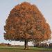 Herbst Charakterbaum in Heiden