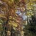 Herbstfarbener Wald