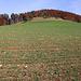 """Blick vom Waldrand bei """"Oltme"""" zum Räschberg (753m). Ich wanderte direkt über die Weiden dem Gipfel weglos entgegen."""
