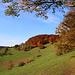 Zwischen Räschberg (753m) wanderte ich in der Sonne dem Waldrand entlang.