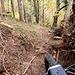 <b>I forestali stimano che solo nel Mendrisiotto gli alberi caduti a causa dello scirocco corrispondano a 17 mila metri cubi di legname.</b>