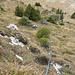 """Christoph, dem das """"Stogere"""" im steilen Gras - hier in der 2. SL - gefällt, kommt dazu [https://www.youtube.com/watch?v=ytvcdSzzMds """"Green Green Grass of Home""""] in den Sinn...zum Glück gibt ihm unsere Route aber keinen Anlass, sich wie seinerzeit am Morgenhorn E-Grat an [https://www.youtube.com/watch?v=l2xFfjSRxP8 """"Deine Spuren im Sand""""] zu erinnern..."""