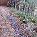 passaggio chiave che evita la strada forestale per Parpinasca e  consente di scendere a Faievo via sentiero (a destra dell'ometto)