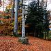 Im Mätzerlechrüz (789m), einem Wanderpass auf der Blauenkette zwischen Metzerlen im Norden und Dittingen im Süden.