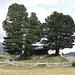 Stadel und Bäume bei Zmutt