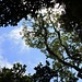 Im dichten Regenwald gibt es nur wenige stellen an denen das direkte Sonnenlicht den Boden erreicht.