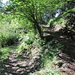 Aufstieg durch den schönen Wald obenhalb von Cortaccio