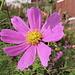 Blumen in einem Garten in Nordhalden