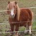 Mini-Pferdle