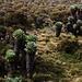 Schopfbäume (Dendrosenecio kilimanjari) wachsen gleich hinter den Horombu Huts (3715m) bei einem Wasserlauf in idyllischer Graslandschaft.