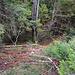 Wenige Meter westlich vom höchsten Punkt des Ottmartgipfels (770m) stieg ich durch den steilen Wald nordseitig zum darunter gelegenen Forstweg ab. Ich würde sie Stelle als T2-3 in der Wanderschwierigkeitsskala bewerten.