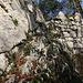 Die wenigen Mauerreste der Ruine Fürstenstein (590m) welche auf einem Felsgrat liegt und der direkte Zustieg für wenige Schritte der schwierigste Teil der Tour ist (knapp T4).