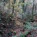 Die wilde Büttelochschlucht liegt direkt oberhalb Ettingen und weist keinen Weg auf. Man bewegt sich meistens direkt im meist versiegten Bachbett vom Dorfbach.