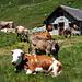 Alp Berg auf dem Weg zur Bergseehütte