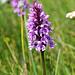 wunderschöne Orchidee. Wer kann mir bei der Bestimmung helfen?