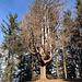 """dieser Baum war im """"früheren Leben"""" wahrscheinlich ein Krake"""