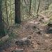 steiler Abstieg nach Gonten