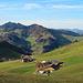 herrliche Appenzeller Landschaft