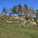 Aus Süden stegiegen wir weglos vom Wanderweg her zur Ruine Tschöpperli auf; auf neuerem Kartenmaterial wird die mittelalterliche Festung auch Ruine Frohberg genannt.<br /><br />Die Burg stammt aus dem späteren 13.Jahrhundert, wurde vermut-lich nie fertiggestellt und bereits Mitte des 14.Jahrhundert wieder verlassen.<br /><br />Informationen aus Wikipedia habe ich bei einem Foto beschrieben als ich die Burg vor über neun Jahren schon einmal besucht hatte: [https://www.hikr.org/gallery/photo452111.html?piz_id=14236#1]