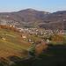 Aussicht unterhalb der Ruine Schalberg nach über die Weinberge der Klus nach Aesch (312m) und zur Schartenflue (759,7m).