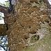 Baumpilze haben einen Stamm besiedelt.