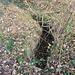 Alter Antriebsgraben, er verliert sich nach etwa 150 m im Dornenfilz, ohne das sein Anlagezweck offenbar wird.