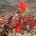 Herbstimpressionen 1