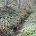 Forstmühle, Mühlgraben, Unterwasser