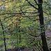 Wir zwei Wanderbären starten an einem Samstagvormittag vom Wanderparkplatz am Friedhof von Bruchweiler-Bärenbach. Gemächlich bergan geht es durch das herbstliche Ambiente des lichten Buchenwalds und ...