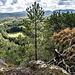 Die karge Vegetation auf den Gipfelflächen der Pfälzer Sandsteintürme finde ich immer besonders urig.