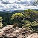 Der Pfälzerwald, wie man ihn mag: knorrige Bergkiefern auf Sandstein-Fels und Wald, so weit das Auge reicht.