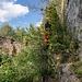 Als alter Raubritter kennt Nik natürlich alle geheimen Zustiege zur Hauptburg: Wir kraxeln auf einem Band (mittig in der im vorherigen Bild gezeigten Wand) durch die Büsche ...